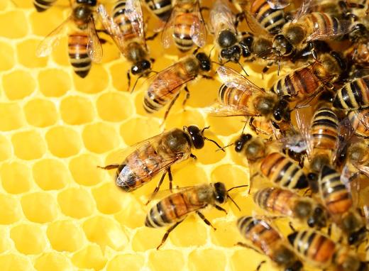 Autour du miel